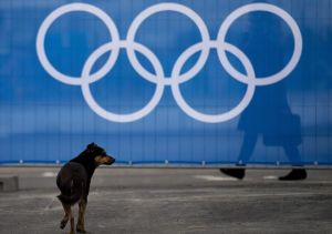 (VIDEO) Stray Dog Wanders Onto Course at Winter Olympics